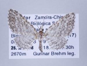 ( - ID 17297)  @14 [ ] Copyright (2010) Gunnar Brehm Institut fuer Spezielle Zoologie und Evolutionsbiologie, Friedrich-Schiller Universitat Jena