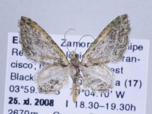 ( - ID 17305)  @14 [ ] Copyright (2010) Gunnar Brehm Institut fuer Spezielle Zoologie und Evolutionsbiologie, Friedrich-Schiller Universitat Jena