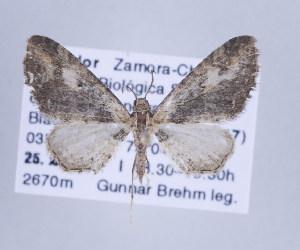 ( - ID 17308)  @14 [ ] Copyright (2010) Gunnar Brehm Institut fuer Spezielle Zoologie und Evolutionsbiologie, Friedrich-Schiller Universitat Jena