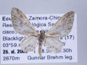 ( - ID 17322)  @14 [ ] Copyright (2010) Gunnar Brehm Institut fuer Spezielle Zoologie und Evolutionsbiologie, Friedrich-Schiller Universitat Jena
