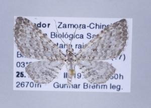 ( - ID 17368)  @14 [ ] Copyright (2010) Gunnar Brehm Institut fuer Spezielle Zoologie und Evolutionsbiologie, Friedrich-Schiller Universitat Jena