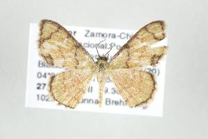 (Haemalea - ID 17504)  @15 [ ] Copyright (2010) Gunnar Brehm Institut fuer Spezielle Zoologie und Evolutionsbiologie, Friedrich-Schiller Universitat Jena