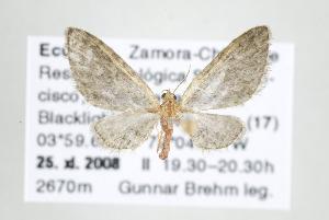 ( - ID 17582)  @14 [ ] Copyright (2010) Gunnar Brehm Institut fuer Spezielle Zoologie und Evolutionsbiologie, Friedrich-Schiller Universitat Jena