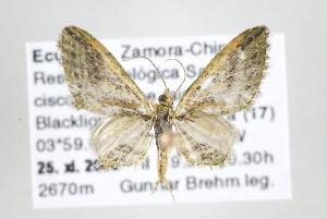 ( - ID 17598)  @14 [ ] Copyright (2010) Gunnar Brehm Institut fuer Spezielle Zoologie und Evolutionsbiologie, Friedrich-Schiller Universitat Jena