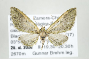 ( - ID 17601)  @14 [ ] Copyright (2010) Gunnar Brehm Institut fuer Spezielle Zoologie und Evolutionsbiologie, Friedrich-Schiller Universitat Jena