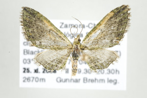 ( - ID 17638)  @14 [ ] Copyright (2010) Gunnar Brehm Institut fuer Spezielle Zoologie und Evolutionsbiologie, Friedrich-Schiller Universitat Jena