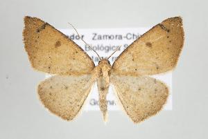 (Mychonia - ID 17670)  @15 [ ] Copyright (2010) Gunnar Brehm Institut fuer Spezielle Zoologie und Evolutionsbiologie, Friedrich-Schiller Universitat Jena