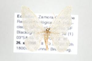 ( - ID 17693)  @13 [ ] Copyright (2010) Gunnar Brehm Institut fuer Spezielle Zoologie und Evolutionsbiologie, Friedrich-Schiller Universitat Jena