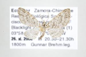 ( - ID 17762)  @14 [ ] Copyright (2010) Gunnar Brehm Institut fuer Spezielle Zoologie und Evolutionsbiologie, Friedrich-Schiller Universitat Jena