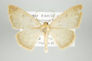 (Perusia - ID 15935)  @15 [ ] Copyright (2010) Gunnar Brehm Institut fuer Spezielle Zoologie und Evolutionsbiologie, Friedrich-Schiller Universitat Jena
