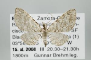 ( - ID 15953)  @14 [ ] Copyright (2010) Gunnar Brehm Institut fuer Spezielle Zoologie und Evolutionsbiologie, Friedrich-Schiller Universitat Jena