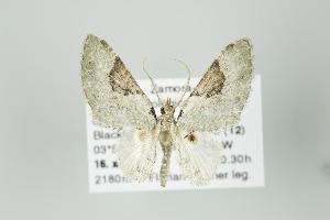 ( - ID 16035)  @14 [ ] Copyright (2010) Gunnar Brehm Institut fuer Spezielle Zoologie und Evolutionsbiologie, Friedrich-Schiller Universitat Jena
