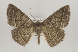 (Cosmophyga - ID 16237)  @14 [ ] Copyright (2010) Gunnar Brehm Institut fuer Spezielle Zoologie und Evolutionsbiologie, Friedrich-Schiller Universitat Jena