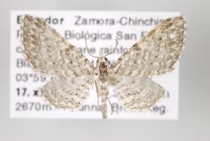 ( - ID 16387)  @15 [ ] Copyright (2010) Gunnar Brehm Institut fuer Spezielle Zoologie und Evolutionsbiologie, Friedrich-Schiller Universitat Jena