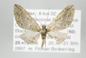 ( - ID 17926)  @14 [ ] Copyright (2010) Gunnar Brehm Institut fuer Spezielle Zoologie und Evolutionsbiologie, Friedrich-Schiller Universitat Jena