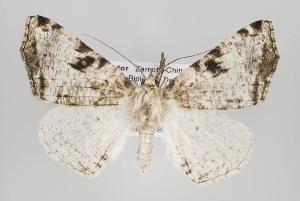(Neodora - ID 15653)  @15 [ ] Copyright (2010) Gunnar Brehm Institut fuer Spezielle Zoologie und Evolutionsbiologie, Friedrich-Schiller Universitat Jena