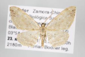 (Trichosterrha - ID 15842)  @14 [ ] Copyright (2010) Gunnar Brehm Institut fuer Spezielle Zoologie und Evolutionsbiologie, Friedrich-Schiller Universitat Jena