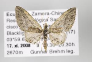 ( - ID 16402)  @14 [ ] Copyright (2010) Gunnar Brehm Institut fuer Spezielle Zoologie und Evolutionsbiologie, Friedrich-Schiller Universitat Jena