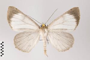 (Tarma - ID 22017)  @15 [ ] Copyright (2011) Gunnar Brehm Institut fuer Spezielle Zoologie und Evolutionsbiologie, Friedrich-Schiller Universitat Jena