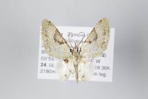 ( - ID 22129)  @13 [ ] Copyright (2011) Gunnar Brehm Institut fuer Spezielle Zoologie und Evolutionsbiologie, Friedrich-Schiller Universitat Jena