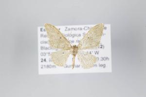 ( - ID 22149)  @12 [ ] Copyright (2011) Gunnar Brehm Institut fuer Spezielle Zoologie und Evolutionsbiologie, Friedrich-Schiller Universitat Jena