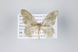 ( - ID 22476)  @12 [ ] Copyright (2011) Gunnar Brehm Institut fuer Spezielle Zoologie und Evolutionsbiologie, Friedrich-Schiller Universitat Jena