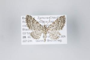 ( - ID 22497)  @13 [ ] Copyright (2011) Gunnar Brehm Institut fuer Spezielle Zoologie und Evolutionsbiologie, Friedrich-Schiller Universitat Jena