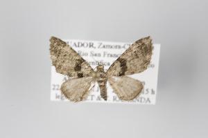 ( - ID 45541)  @14 [ ] Copyright (2011) Gunnar Brehm Institut fuer Spezielle Zoologie und Evolutionsbiologie, Friedrich-Schiller Universitat Jena