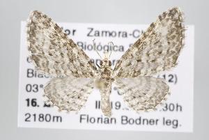 ( - ID 15214)  @14 [ ] Copyright (2013) Gunnar Brehm Institut fuer Spezielle Zoologie und Evolutionsbiologie, Friedrich-Schiller Universität Jena