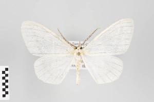 (Neuromelia - ID 18661)  @14 [ ] Copyright (2013) Gunnar Brehm Institut fuer Spezielle Zoologie und Evolutionsbiologie, Friedrich-Schiller Universität Jena