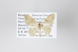 ( - ID 18896)  @12 [ ] Copyright (2013) Gunnar Brehm Institut fuer Spezielle Zoologie und Evolutionsbiologie, Friedrich-Schiller Universität Jena