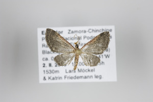 ( - ID 19914)  @12 [ ] Copyright (2013) Gunnar Brehm Institut fuer Spezielle Zoologie und Evolutionsbiologie, Friedrich-Schiller Universität Jena