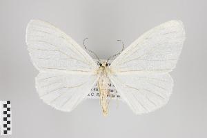 (Neuromelia - ID 44628)  @14 [ ] Copyright (2013) Gunnar Brehm Institut fuer Spezielle Zoologie und Evolutionsbiologie, Friedrich-Schiller Universität Jena