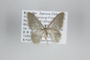 ( - ID 25060)  @12 [ ] Copyright (2014) Gunnar Brehm Institut fuer Spezielle Zoologie und Evolutionsbiologie, Friedrich-Schiller Universität Jena