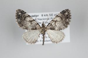 ( - ID 25067)  @14 [ ] Copyright (2014) Gunnar Brehm Institut fuer Spezielle Zoologie und Evolutionsbiologie, Friedrich-Schiller Universität Jena