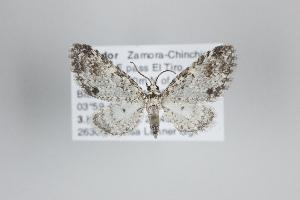 ( - ID 25071)  @13 [ ] Copyright (2014) Gunnar Brehm Institut fuer Spezielle Zoologie und Evolutionsbiologie, Friedrich-Schiller Universität Jena