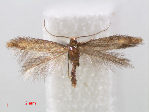 (Coptotriche marginea - RMNH.INS.544347)  @14 [ ] Unspecified (default): All Rights Reserved  Unspecified Unspecified