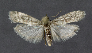 ( - KBE 2018441 b)  @11 [ ] Creative Commons – Attribution Non-Commercial Share-Alike (2019) Kai Berggren NTNU University Museum, Department of Natural History