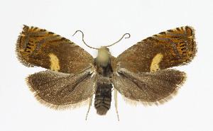 ( - KBE 2019389)  @11 [ ] Creative Commons – Attribution Non-Commercial Share-Alike (2019) Kai Berggren NTNU University Museum, Department of Natural History