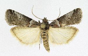 ( - KBE 2019408)  @11 [ ] Creative Commons – Attribution Non-Commercial Share-Alike (2019) Kai Berggren NTNU University Museum, Department of Natural History