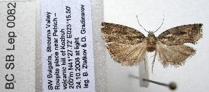 (Epinotia sp. n - BC_SB_Lep_0082)  @13 [ ] CreativeCommons - Attribution Non-Commercial Share-Alike (2010) NMNH, Sofia, Bulgaria Centre for Biodiversity Genomics