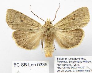 ( - BC_SB_Lep_0336)  @11 [ ] CreativeCommons - Attribution Non-Commercial Share-Alike (2010) NMNH, Sofia, Bulgaria Centre for Biodiversity Genomics