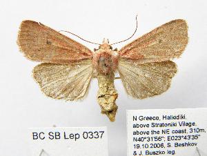 ( - BC_SB_Lep_0337)  @11 [ ] CreativeCommons - Attribution Non-Commercial Share-Alike (2010) NMNH, Sofia, Bulgaria Centre for Biodiversity Genomics