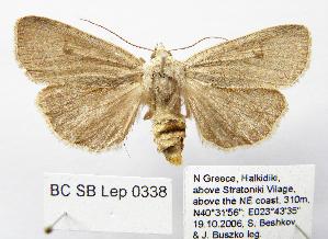 ( - BC_SB_Lep_0338)  @11 [ ] CreativeCommons - Attribution Non-Commercial Share-Alike (2010) NMNH, Sofia, Bulgaria Centre for Biodiversity Genomics