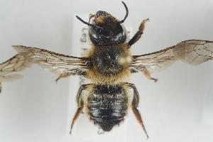 ( - NOAPI471)  @13 [ ] CreativeCommons - Attribution Non-Commercial Share-Alike (2014) Arnstein Staverlokk Norwegian Institute of Nature Research