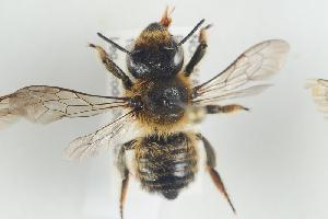 ( - NOAPI472)  @13 [ ] CreativeCommons - Attribution Non-Commercial Share-Alike (2014) Arnstein Staverlokk Norwegian Institute of Nature Research