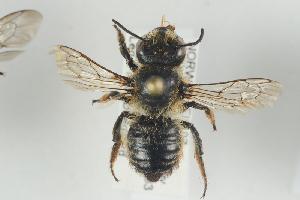( - NOAPI473)  @13 [ ] CreativeCommons - Attribution Non-Commercial Share-Alike (2014) Arnstein Staverlokk Norwegian Institute of Nature Research