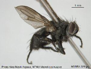 (Stevenia - NOBRA 329)  @14 [ ] CreativeCommons - Attribution Non-Commercial Share-Alike (2015) NTNU University Museum, Department of Natural History NTNU University Museum, Department of Natural History