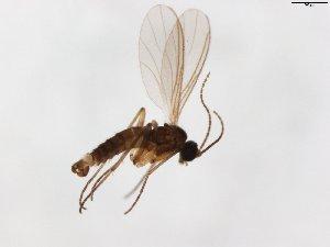 (Camptochaeta duplicata - TSZD-JKJ-104113)  @11 [ ] by-nc-sa (2018) Unspecified Tromsø University Museum