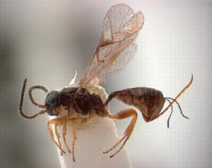 (IchneumonidaeDW - NZAC04037876)  @14 [ ] Unspecified (default): All Rights Reserved  Unspecified Unspecified